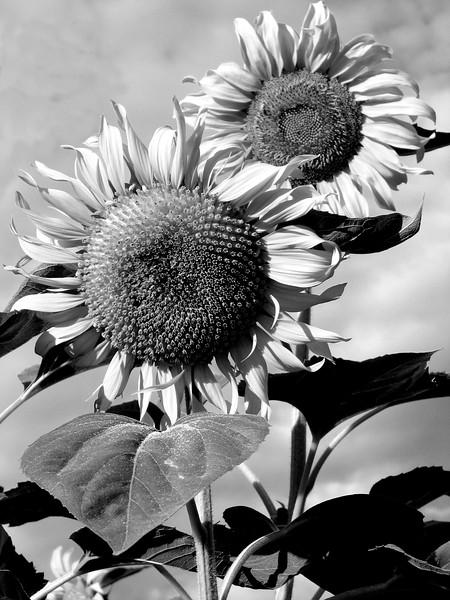 amh FLOWERS (1919).jpg