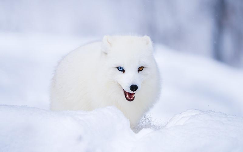 Animals of Québec