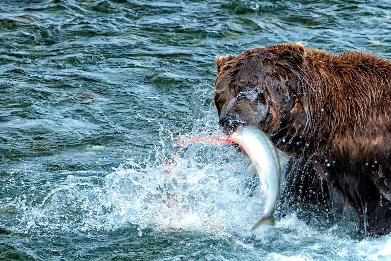 Alaska_2013_FH0T7675.jpg
