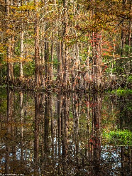 swamp_poles.JPG