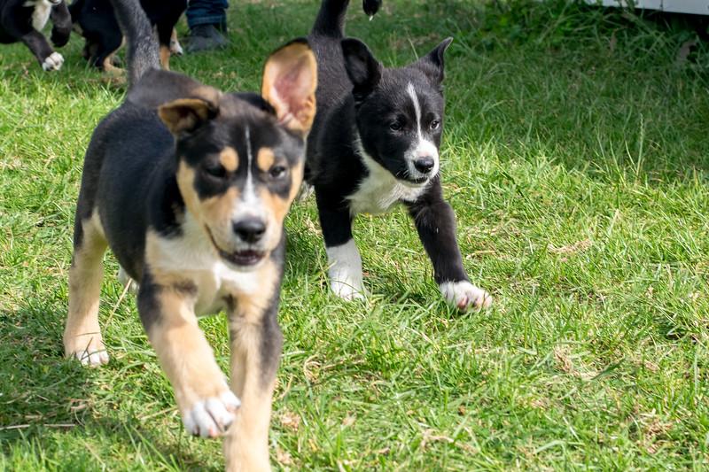Honey's Puppies #2 & #1