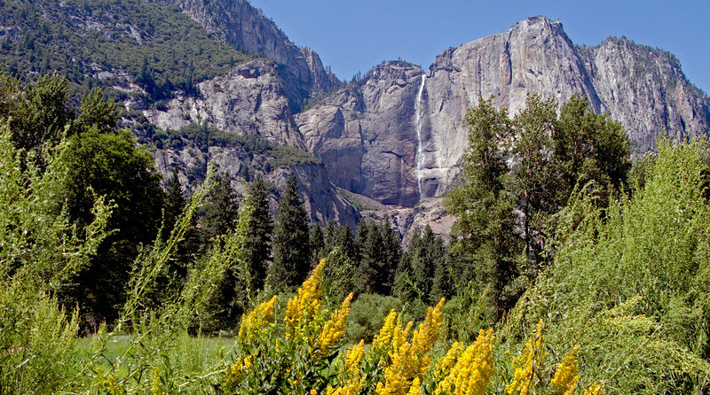 Yosemite falls & goldenrod screen.jpg