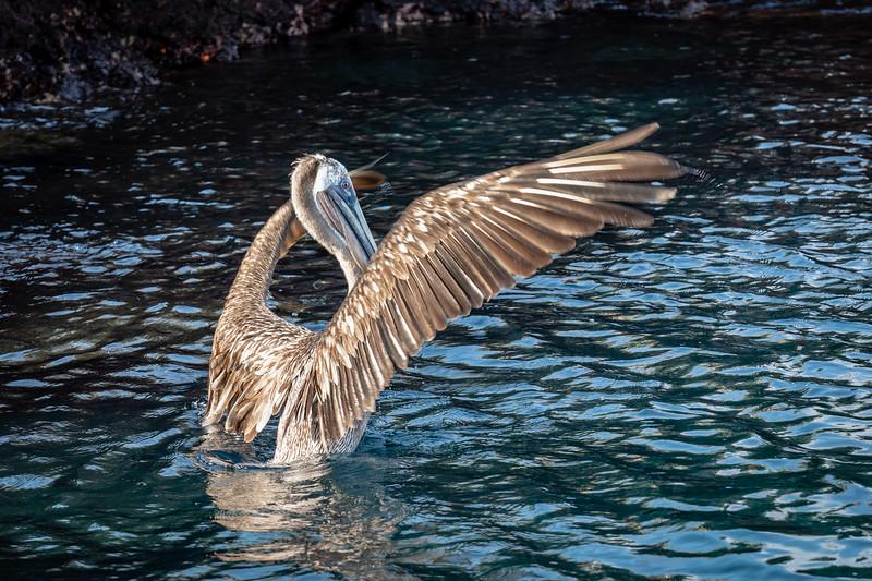 Galapagos-3573-2.jpg