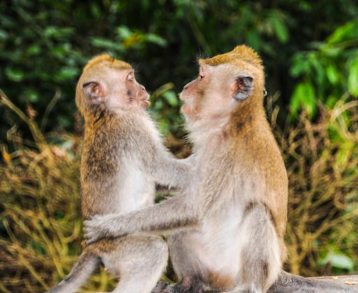 Bali Monkeys-6.jpg