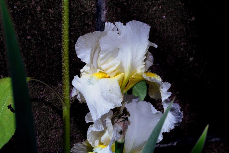 white_flowers-.jpg