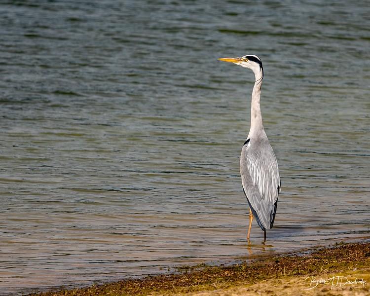 Ardingly Reservoir-8245.jpg