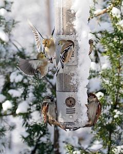 Miscellaneous Birds 2009-2010