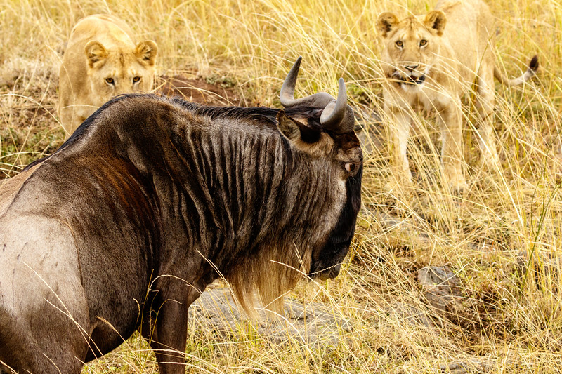 Kenya 2015-07981.jpg