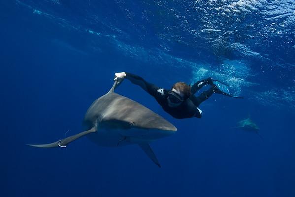Sharks_28july