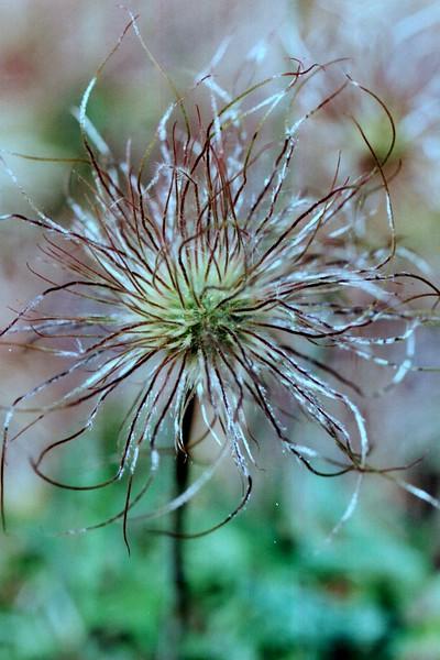 amh FLOWERS (1139).jpg