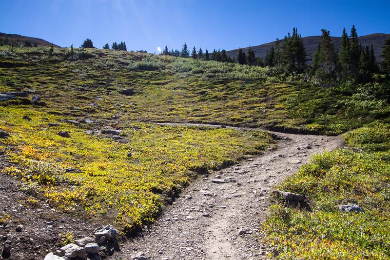 trail, Parker Ridge