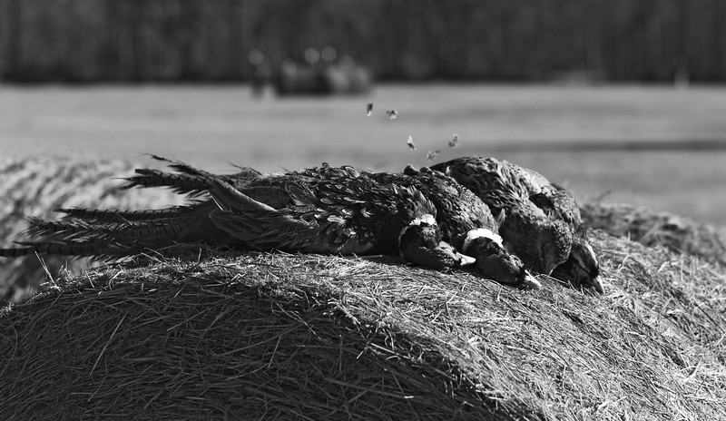2017 MUHLER Tower Shoot_Backwoods Quail Club_1 BW.jpg