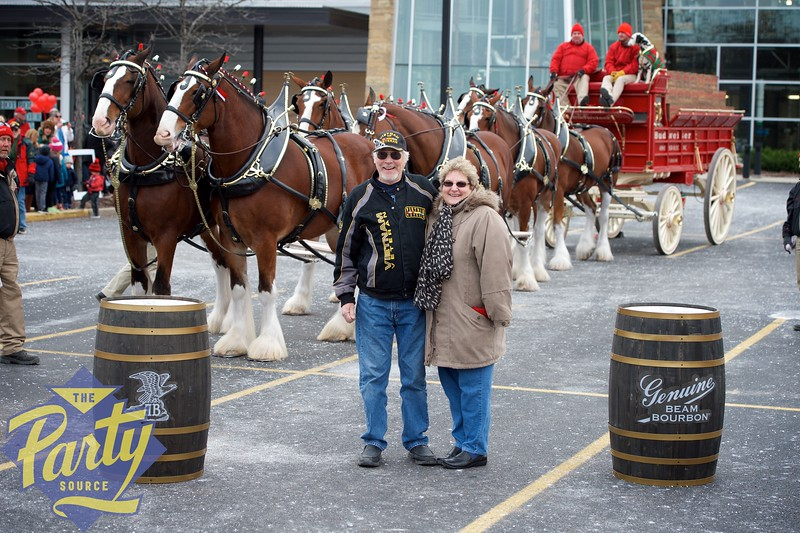 Clydesdale Portraits 50.jpg