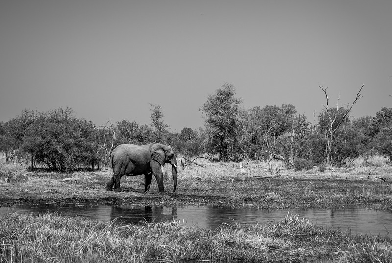 Botswana_June_2017 (3368 of 6179).jpg