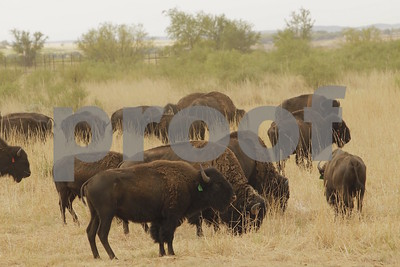 tickets-on-sale-for-7th-texas-state-bison-music-festival