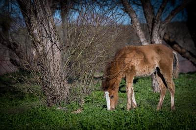 Wild Horse Shoot, 2/16