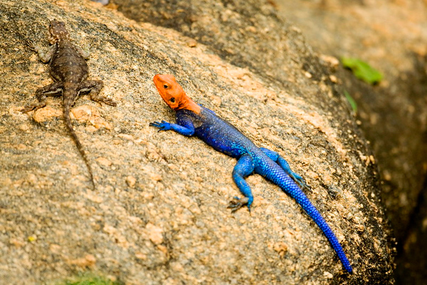 Reptiles of Africa  זוחלים באפריקה