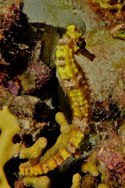 green seahorse bon18.jpg