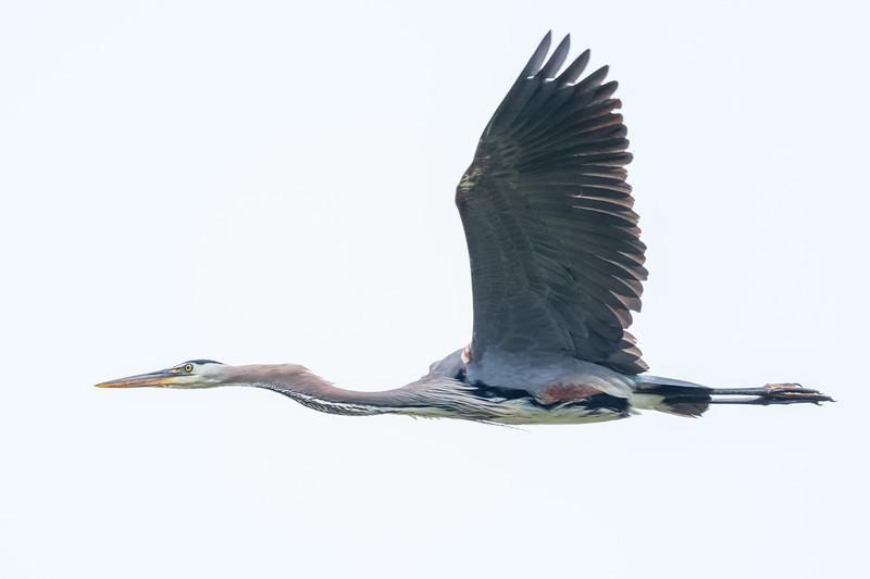 Elkhorn Slough State Marine Reserve - Moss Landing - Castroville CA USA