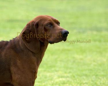 RHKC 2011 - Redbone Coonhounds