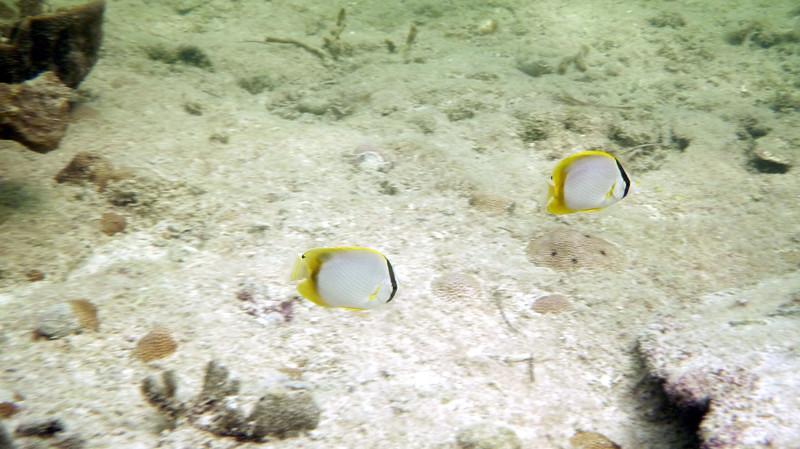 Florida-Keys-Key-West-Snorkeling-04.JPG