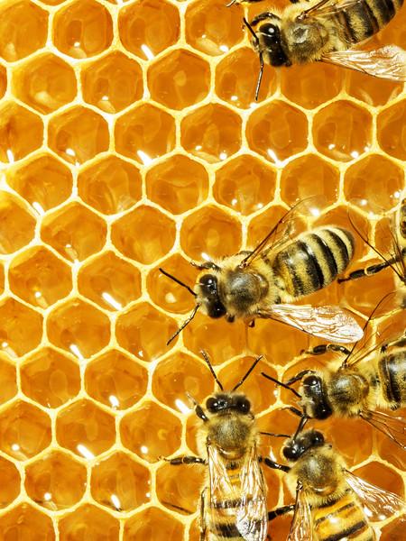 Bee_CombVert.jpg