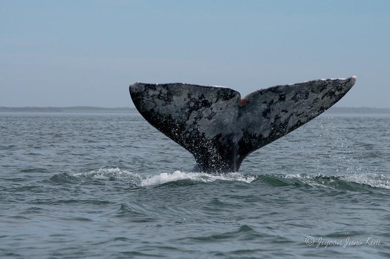 Mexico-Loreto-Whale-2408.jpg