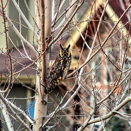 Owl-002