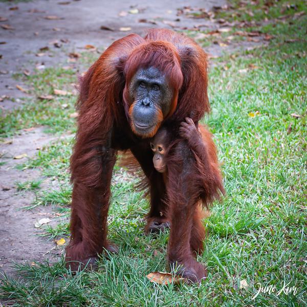 2012.10.07_Borneo_DSC_7555-Juno Kim.jpg