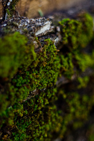 Moss on the Tree 27