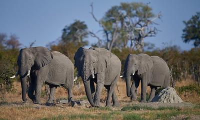 Botswana Safari 2017