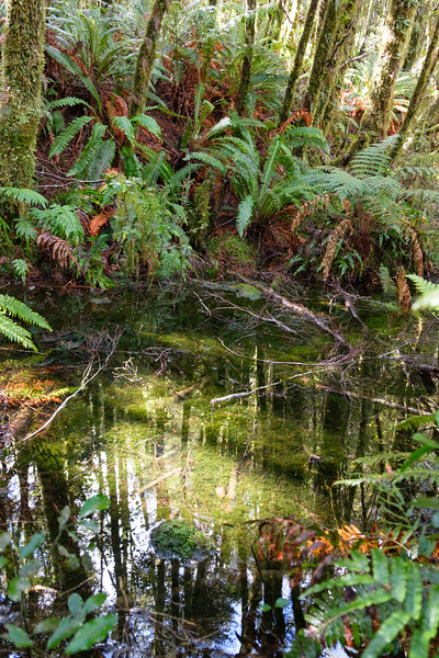 Pond in natvie bush, Fjordland, South Island, New Zealand