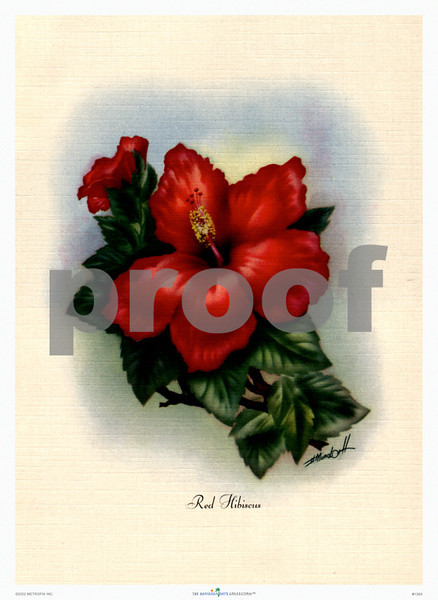 128: 'Wood Rose' by Ted Mundorff Floral Art Print, ca 1940-1950. (PROOF watermark will not appear on your print)
