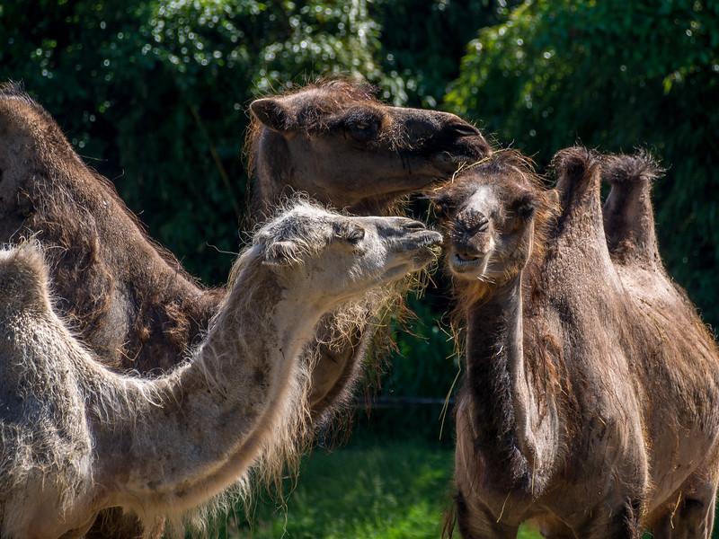 Zoo Parc Overloon_15062013 (36 van 178).jpg