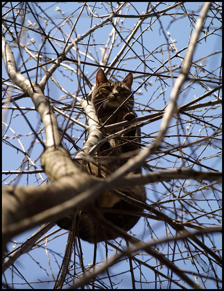 Otage This is Balthasar - escaped and trapped in a tree... :)