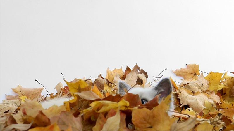 kitten_leaves_06.mov