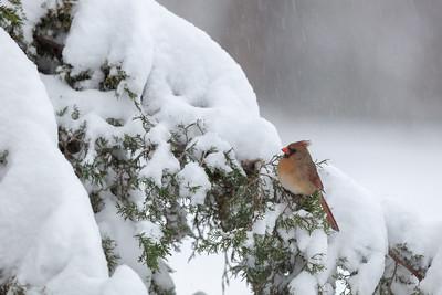 Snow birds 12-9-2018