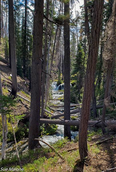 08-18-2020 Boundary Springs Hike-8.jpg