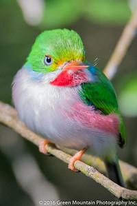 Cuba Birds 2016