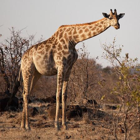 Zambia -  Mosi-oa-Tunya Park