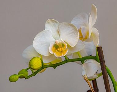 Bren's Orchids 3 25 2020