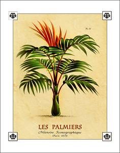 Palm Tree Prints