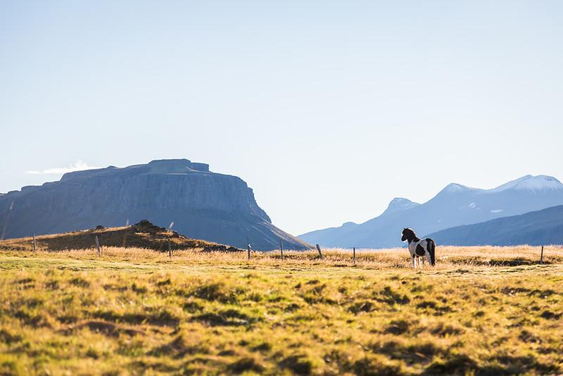0145-Iceland-Paul-Hamill.jpg