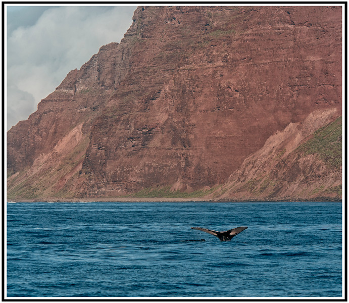 1 a whale cliffs hawaii.jpg