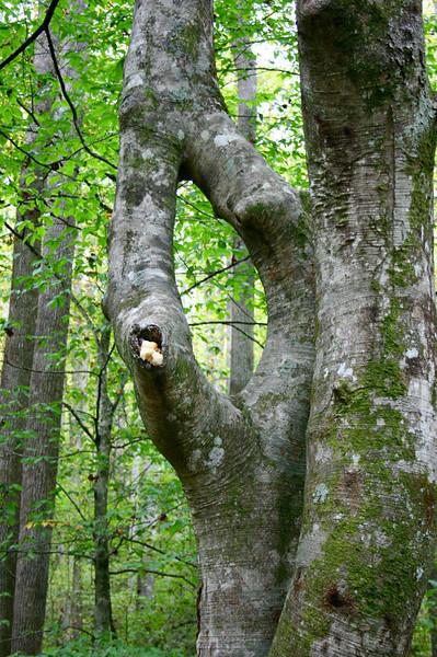 Pisgah Forest 9-30-12 88.jpg