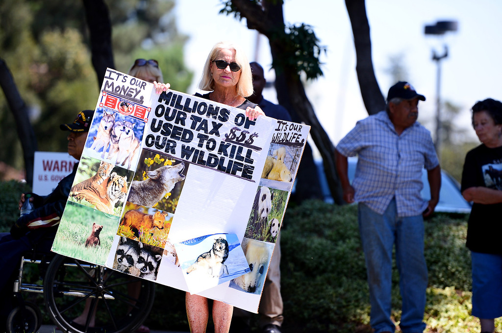 ". Animal advocate Patty Shenker, of Tarzana, protests outside the Ninth Circuit Court of Appeals in Pasadena with wildlife activists before attending a hearing on Bureau of Land Management\'s round-up of wild horses Thursday, August 29, 2013. ""It\'s basically corporations who are doing this to our wildlife,\"" says Shenker. \""Big oil and gas and cattle ranchers want our land.\"" (Photo by Sarah Reingewirtz/Pasadena Star-News)"