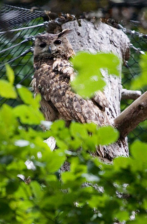 Birds at Tiergarten, the Schonbrunn Zoo
