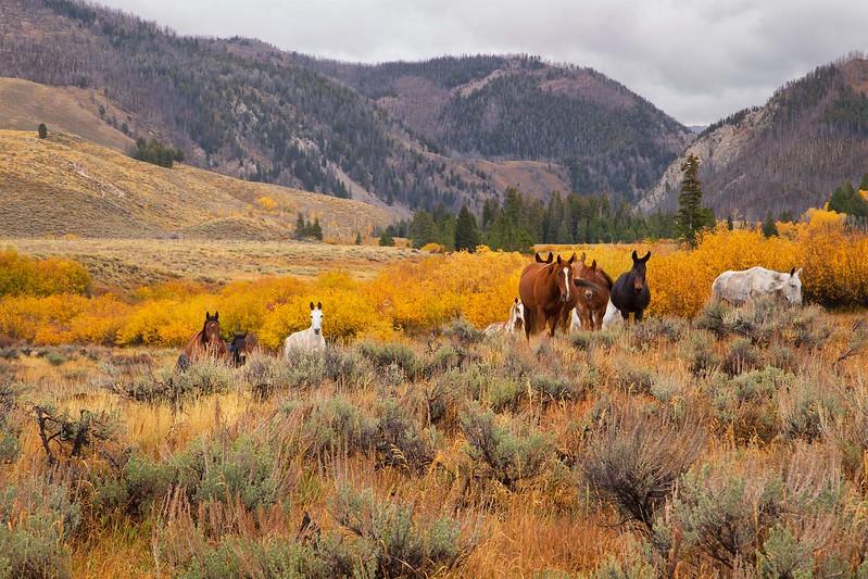 DA054,DP,Forest Service Work Horses.jpg