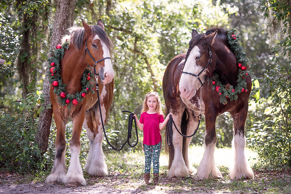 Clydesdales Oct 2019 - Andrews