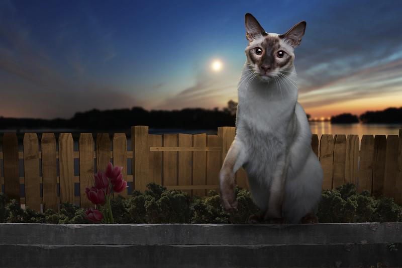 Saule-cat-12.jpg